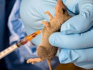 Lassa fever tested positive