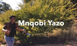 Mnqobi Yazo – Labhubha mp3 download
